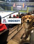 Pucks for Paws