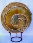 Sacred Sea: Ammonite Gourd Workshop