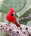 Bird Walk / Dave Mitchell