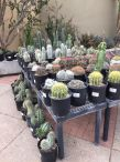 Arboretum Fall Plant Sale