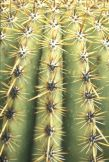 The Spines of a Saguaro Cactus / NPS Photo