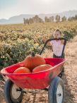Apple Annie's Fall Pumpkin Celebration / Apple Annie's Orchard